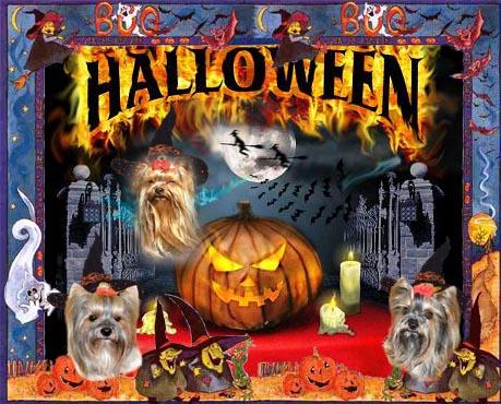 An den Beitrag angehängtes Bild: http://www.meine-lausbuben.de/extras/halloween2007.jpg